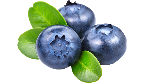 Blueberries PNG - Blueberry PNG