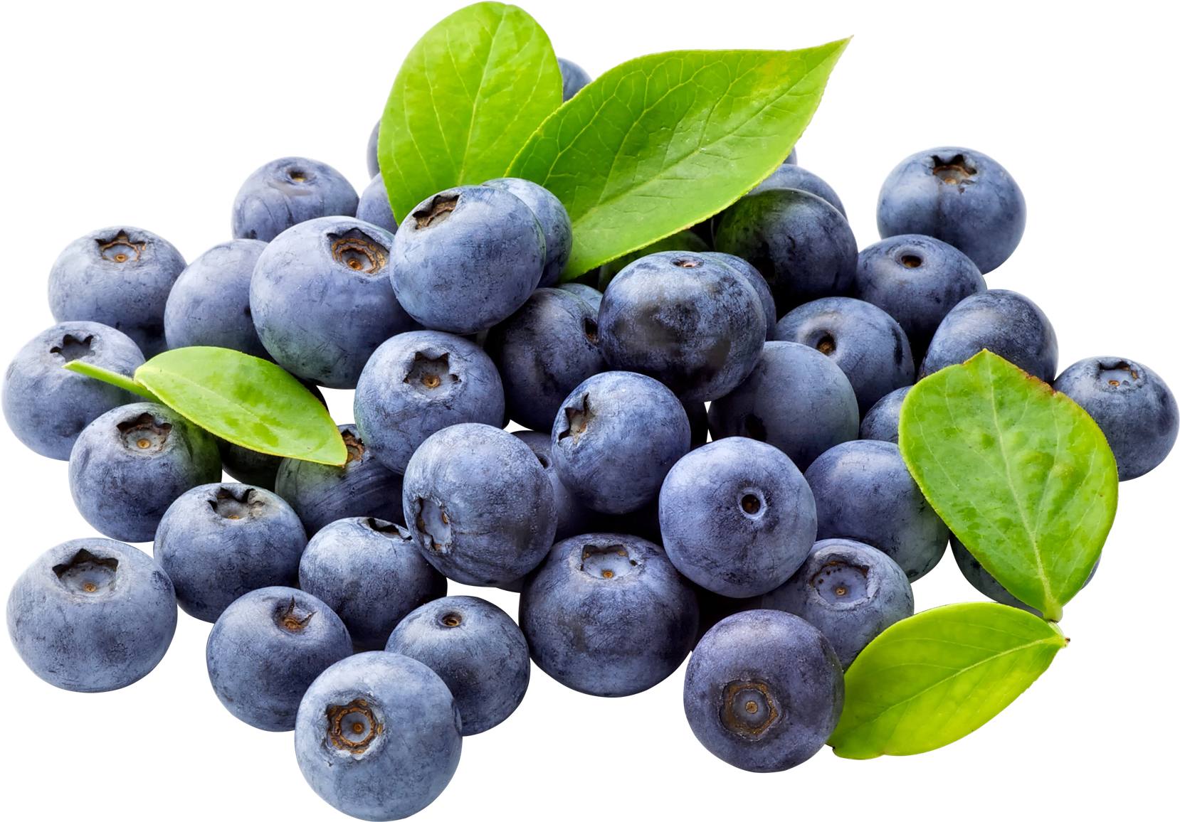 Blueberry PNG Free Download - Blueberry PNG