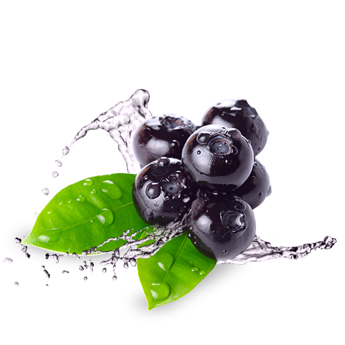 Blueberry PNG HD-PlusPNG.com-500 - Blueberry PNG HD