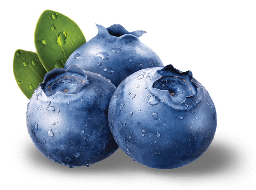 Blueberries PNG - Blueberry PNG - Blueberry PNG HD