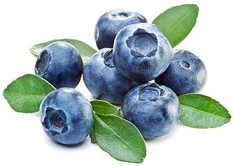 If you love fresh blueberries, youu0027re in luck! New Jersey is one of ten - Blueberry PNG HD