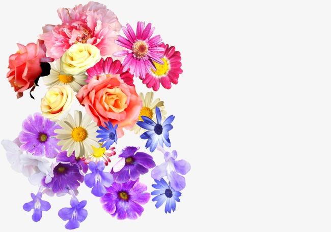 Blumen Bunt PNG - 148707
