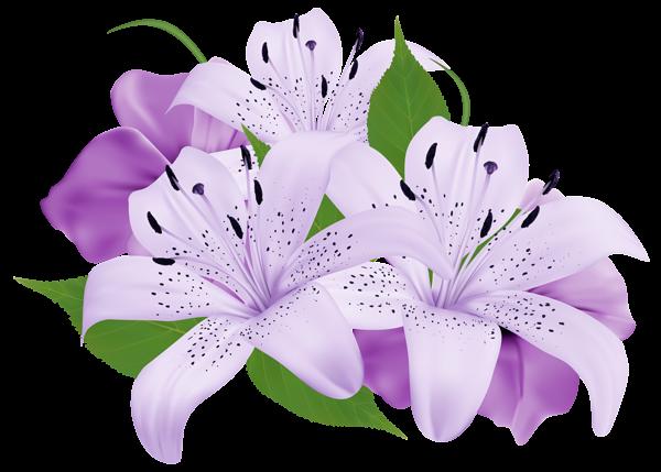 Exotische Blumen, Schöne Blu