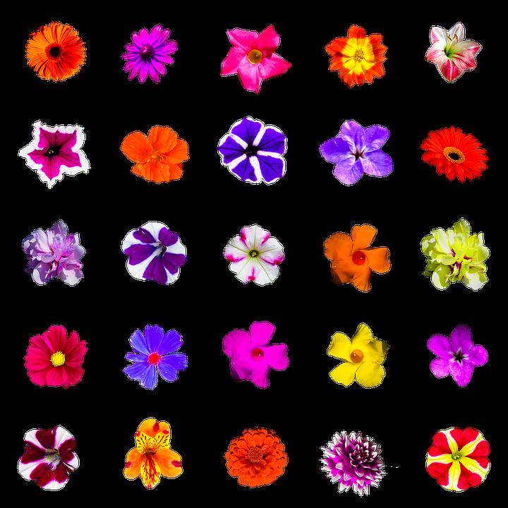 Blumen Bunt PNG - 148709