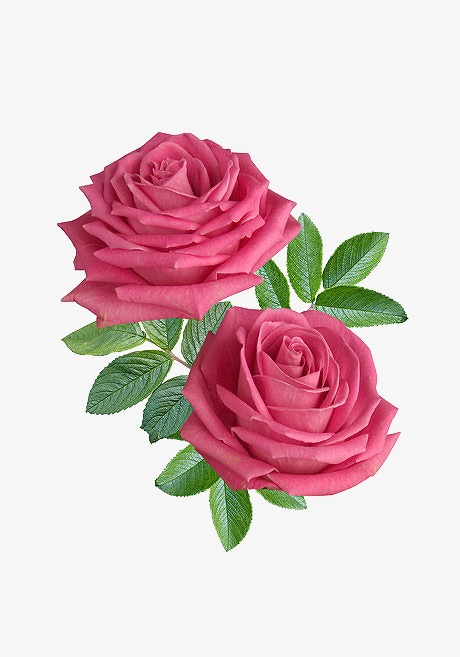 Bouquet Of Roses PNG HD - 142849