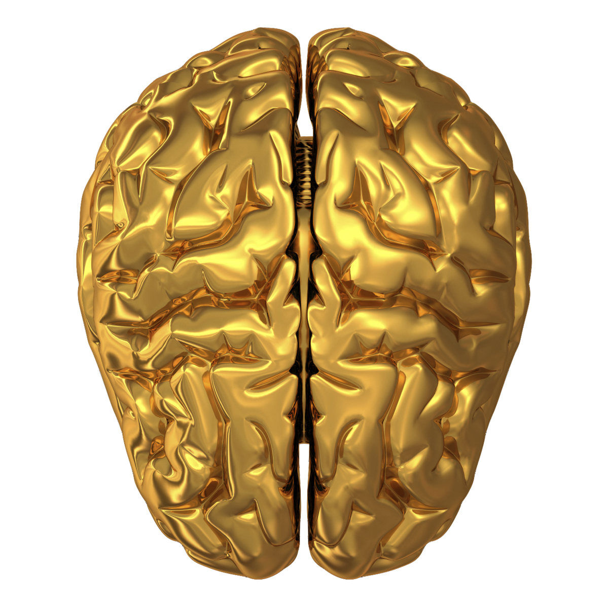 Brain HD PNG