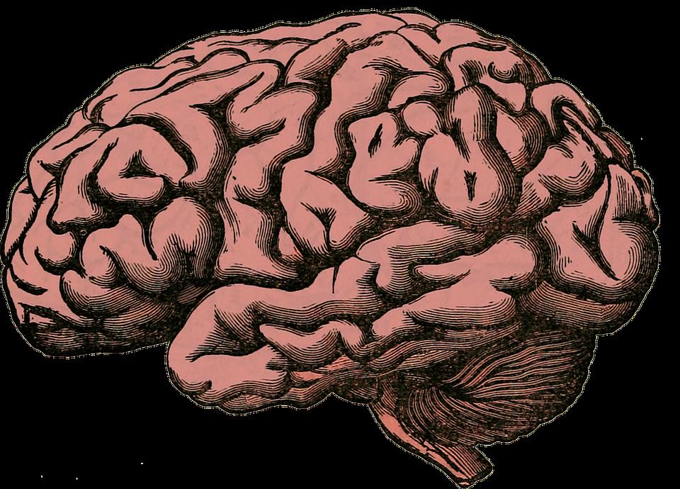 Brain HD PNG - 96374