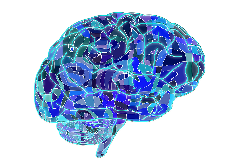 Brain, Biology, Abstract, Cerebrum, Science, Anatomy - Brain HD PNG