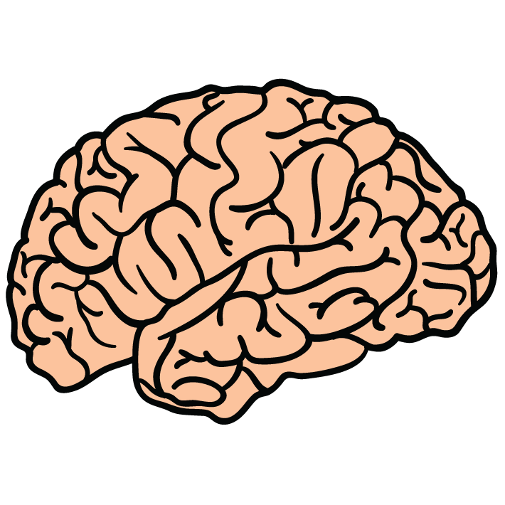 Patterns - Brain HD PNG