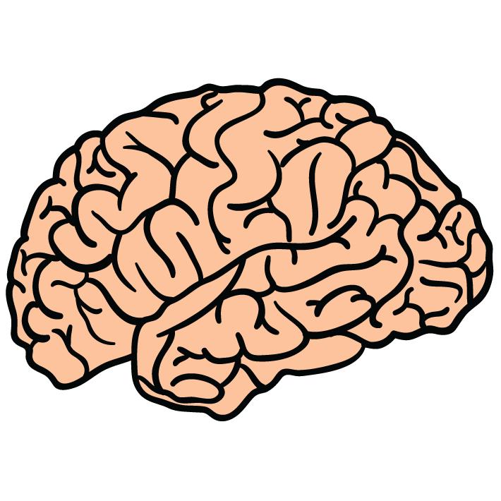 Brain HD PNG - 96373