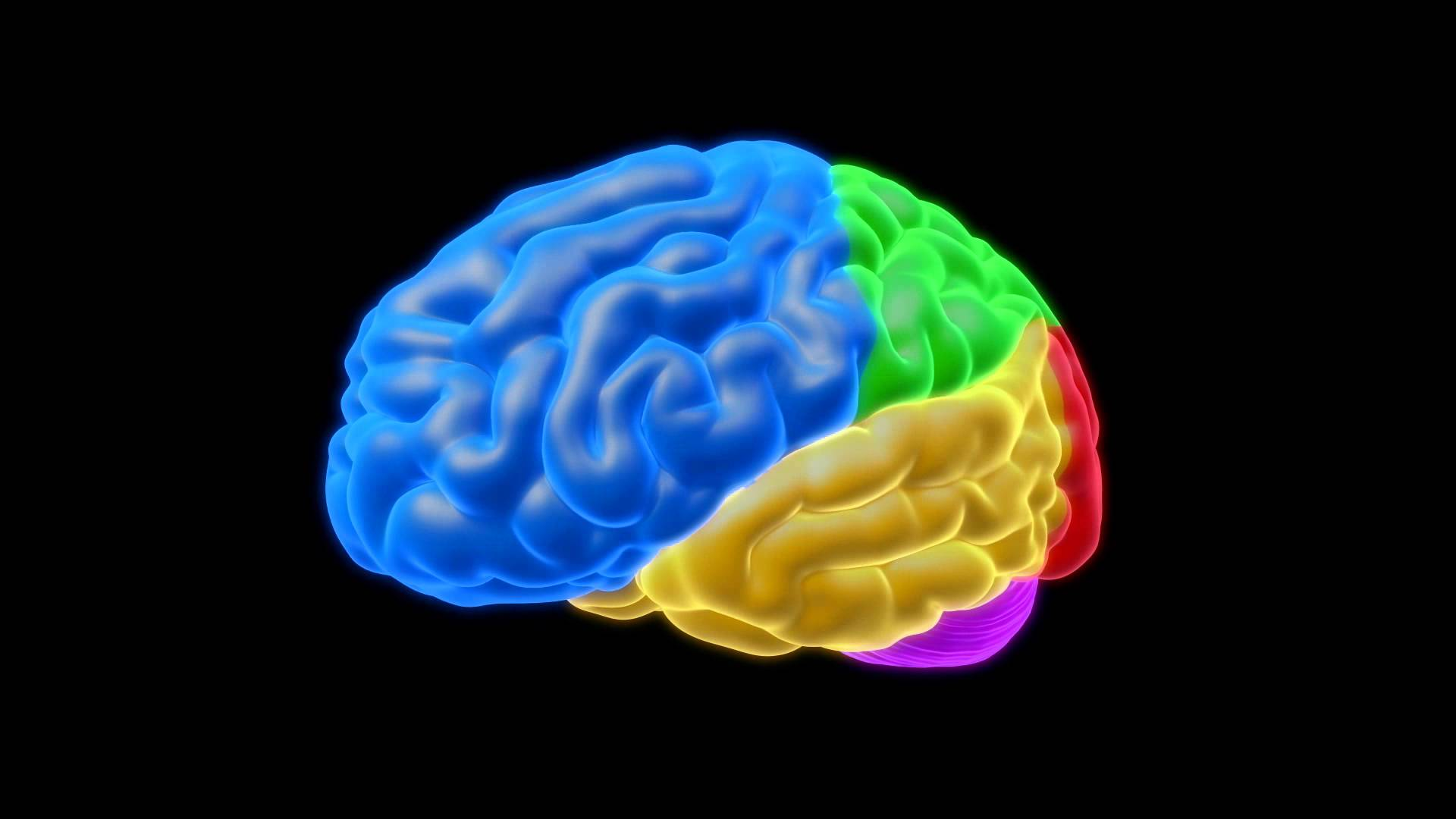 Brain HD PNG - 96379