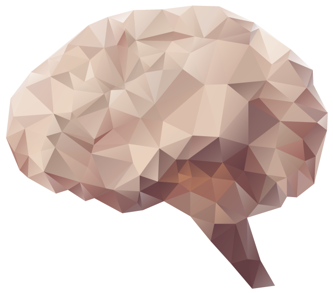 Brain HD PNG - 96378