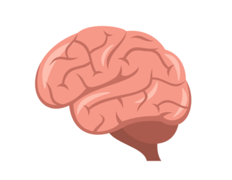 That means all your devicesu0027 keyboards should start including a brain  within a few months, and itu0027ll look something like this: - Brain HD PNG