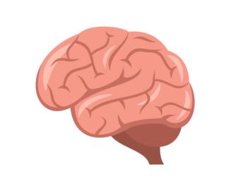 Brain HD PNG - 96381