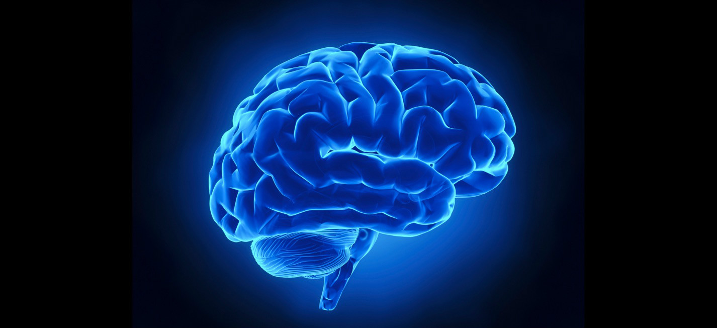 Brain HD PNG - 96372