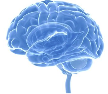 This Brain Boost Method training module focuses on how to build and improve  your brain to enhance memory and make improvements so that you are happier  in PlusPng.com  - Brain Memory PNG