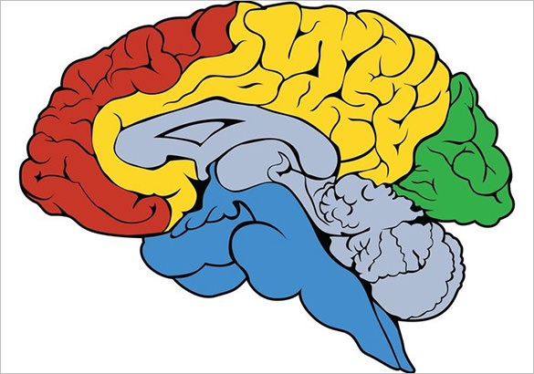 Astonishing Free Human Brain Vector - Brain PNG