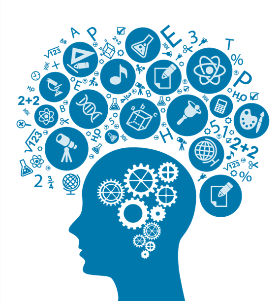 Brain PNG - 10571