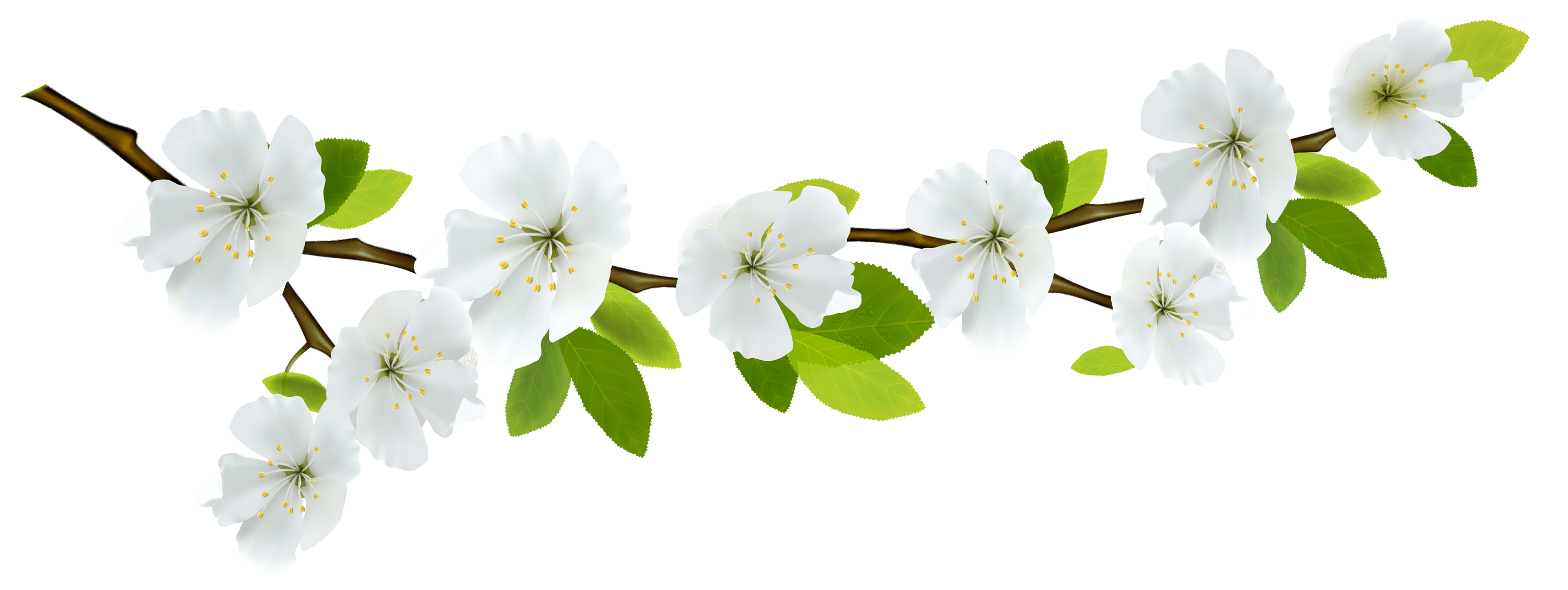 Branch and Flowers - Branch PNG