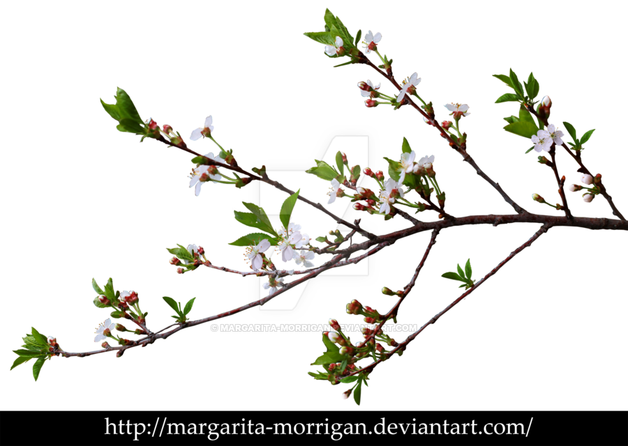 branch of cherry blossoms by margarita-morrigan - Branch PNG