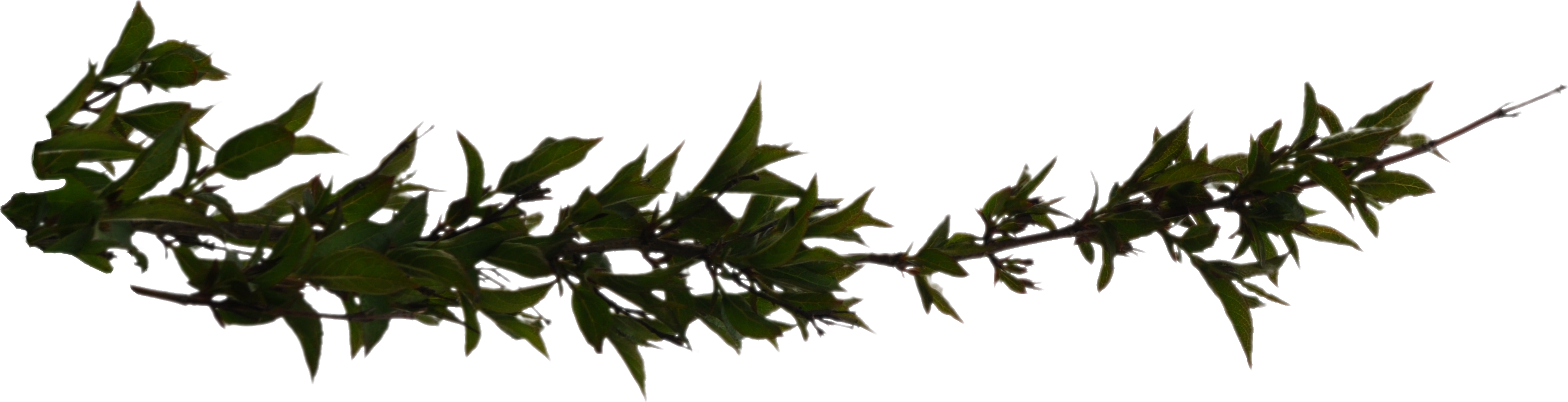 Branch PNG - 4485