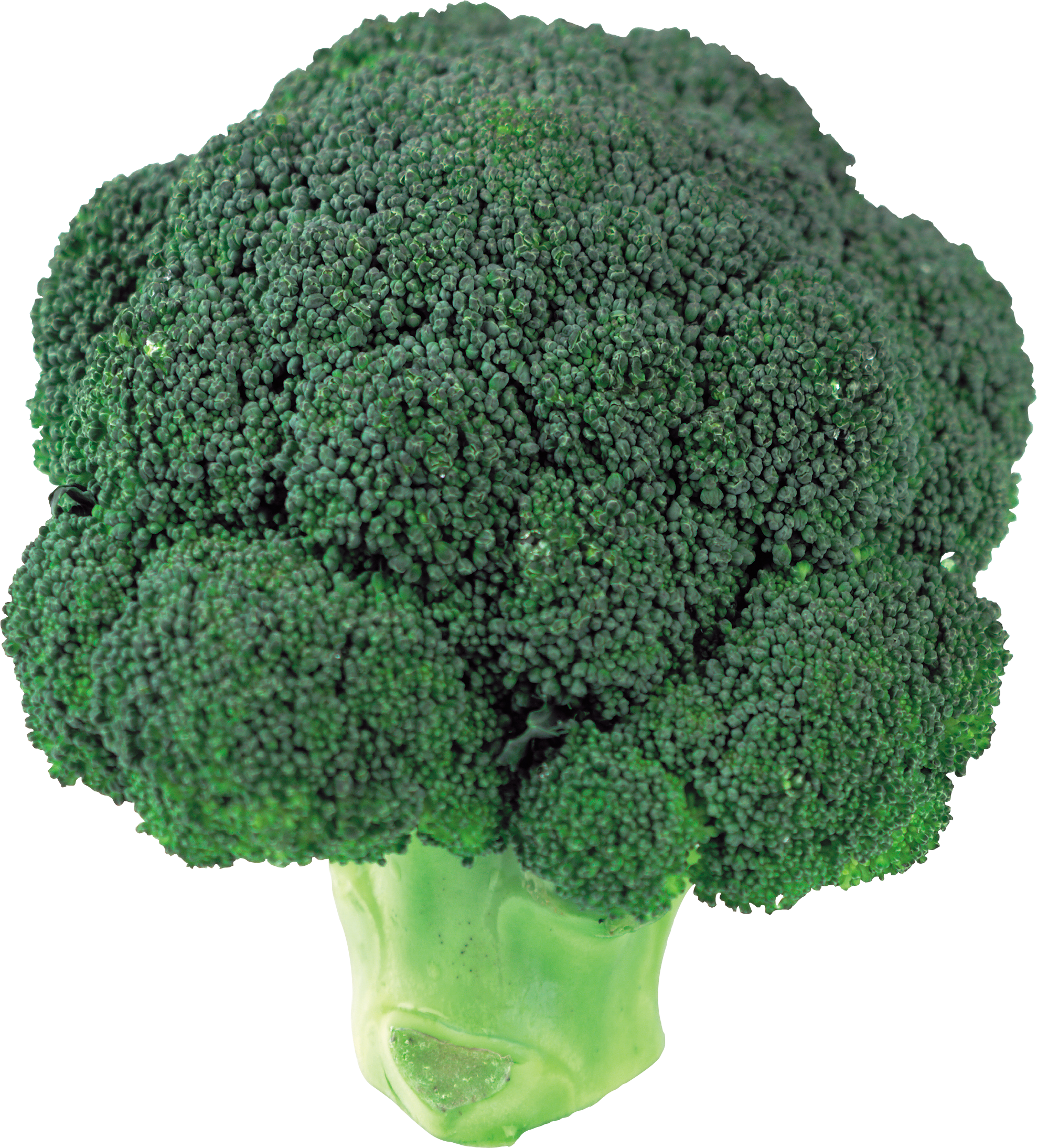 Broccoli PNG image - Broccoli HD PNG