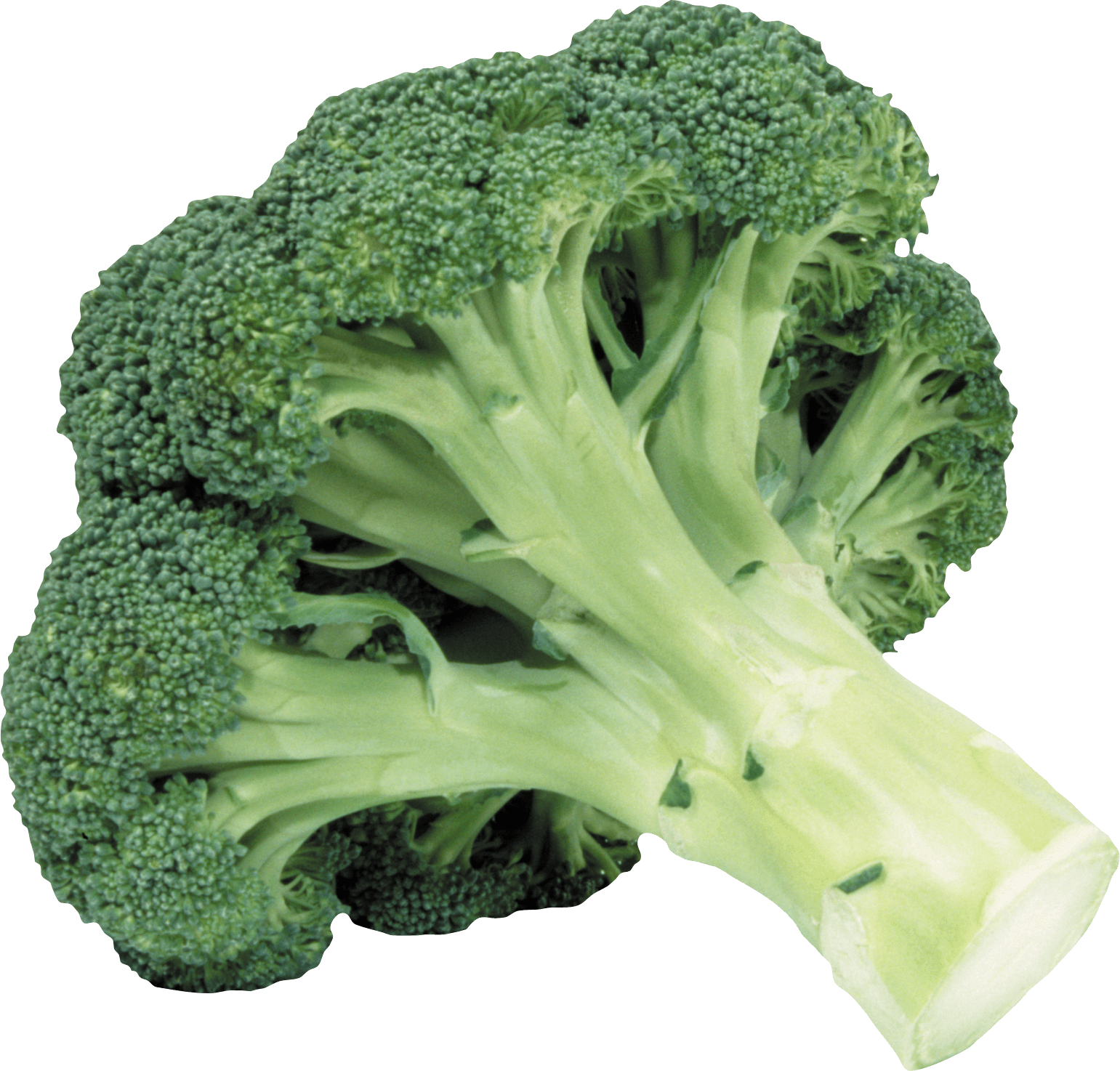 Broccoli Png Image PNG Image - Broccoli HD PNG