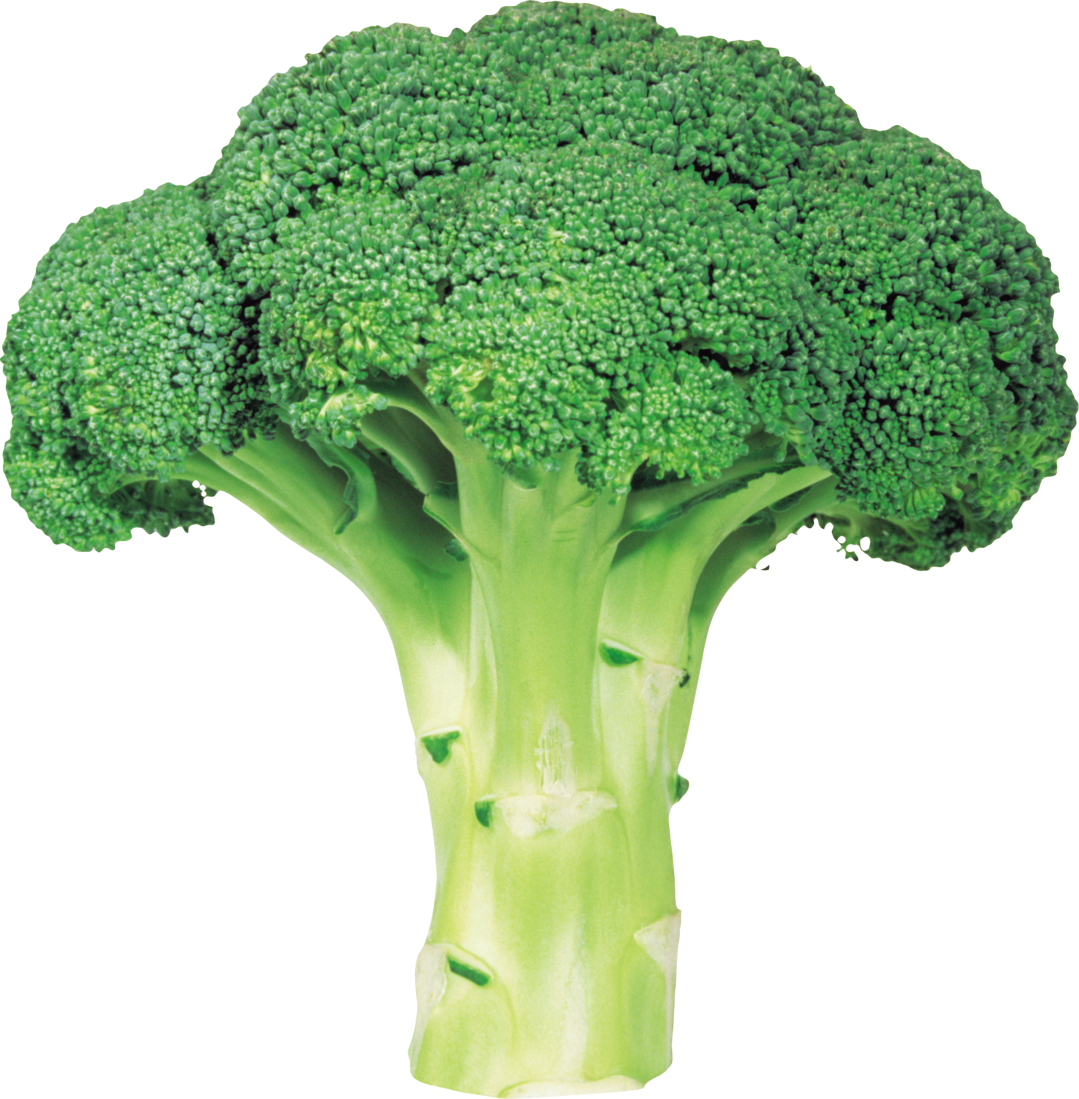 Broccoli PNG image with transparent background - Broccoli HD PNG