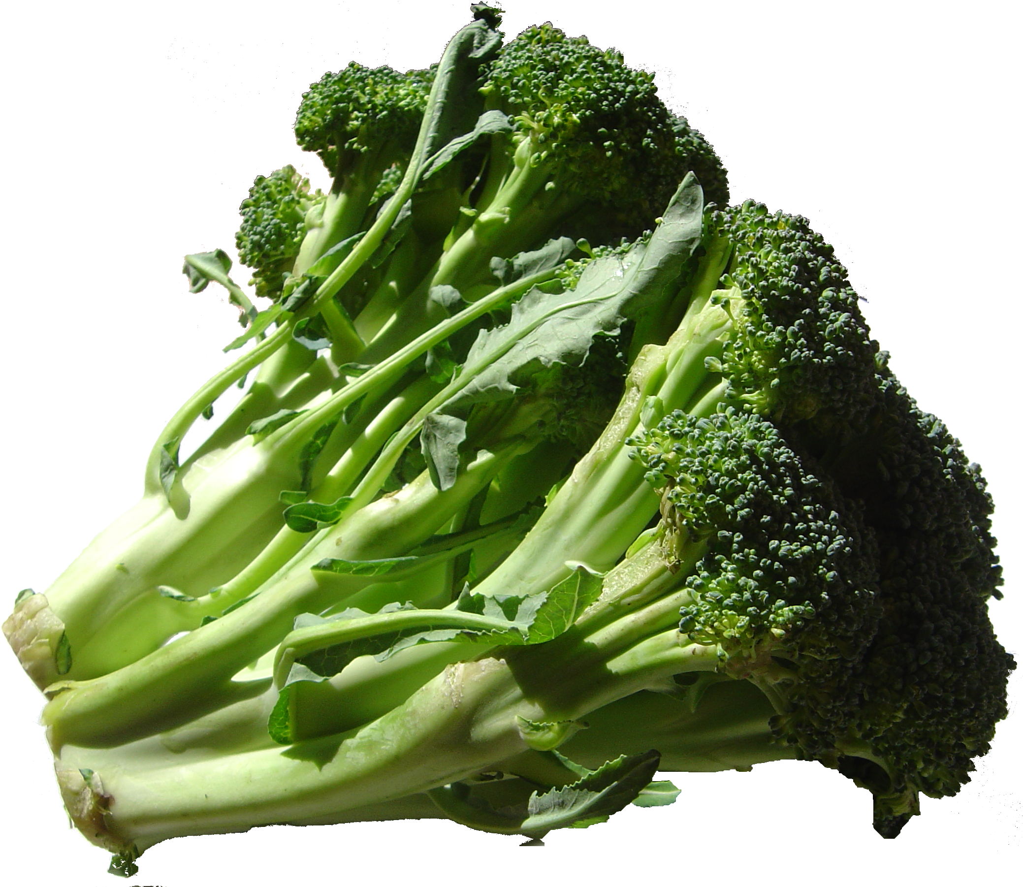 File:Broccoli DSC00862.png - Broccoli HD PNG