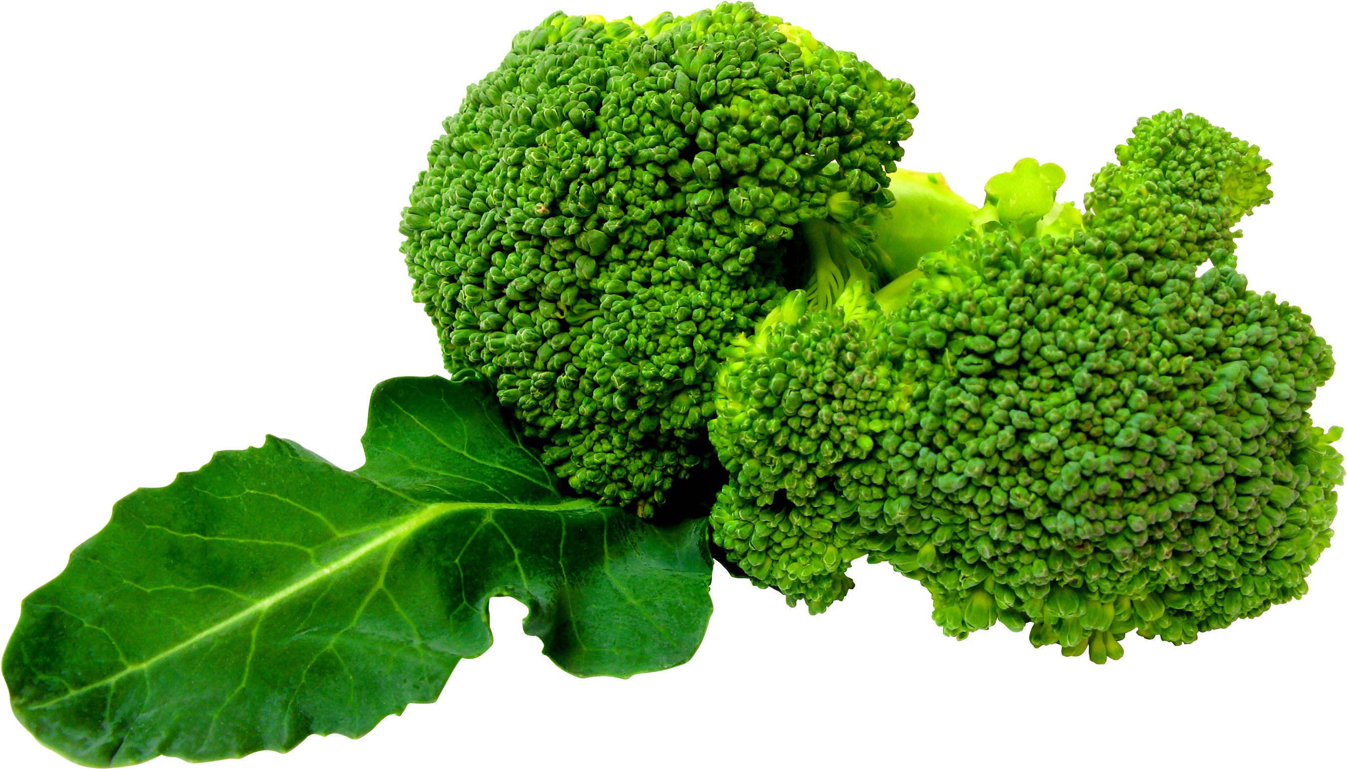 Green Broccoli PNG image - Broccoli HD PNG
