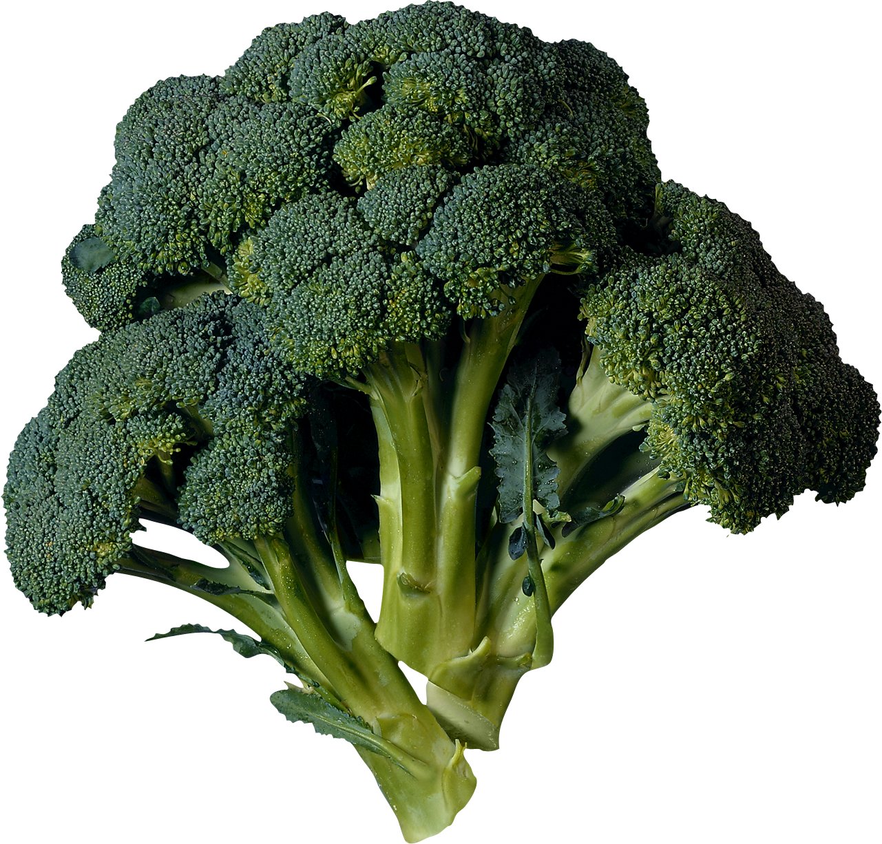 Broccoli PNG image - Broccoli PNG