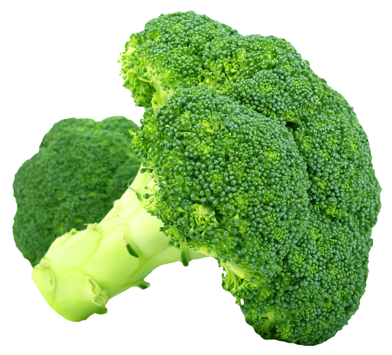 Broccoli PNG Transparent Image - Broccoli PNG