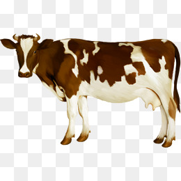 cow, Color, Animal, Lovely PNG Image and Clipart