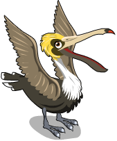 Brown Pelican - Brown Pelican PNG