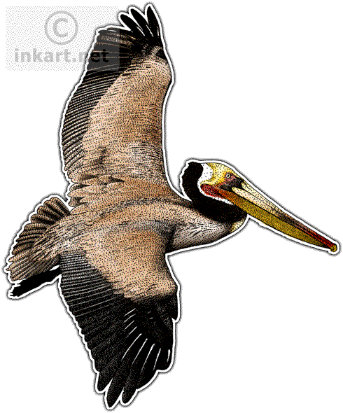 Brown Pelican Decal - Brown Pelican PNG