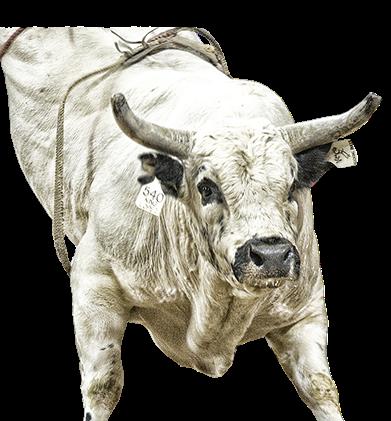 Bull riding - Bucking Bull PNG
