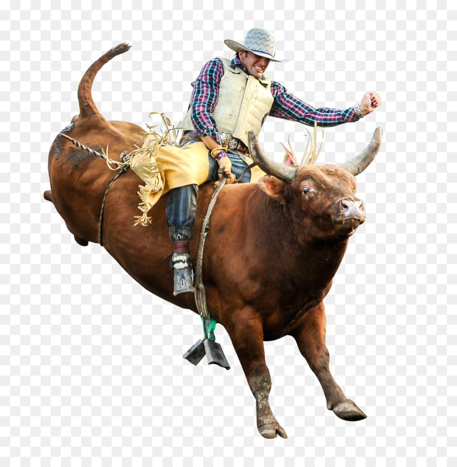 Bull riding Professional Bull Riders Rodeo Bucking bull - bull - Bucking Bull PNG