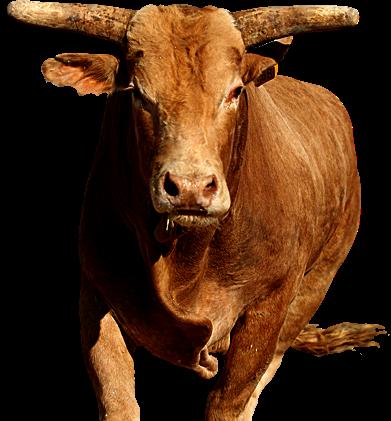 Highway 12 - Bucking Bull PNG