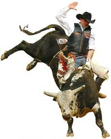 Rodeo, look at that Bull Twist! Any Cowboy would like to ride him in - Bucking Bull PNG