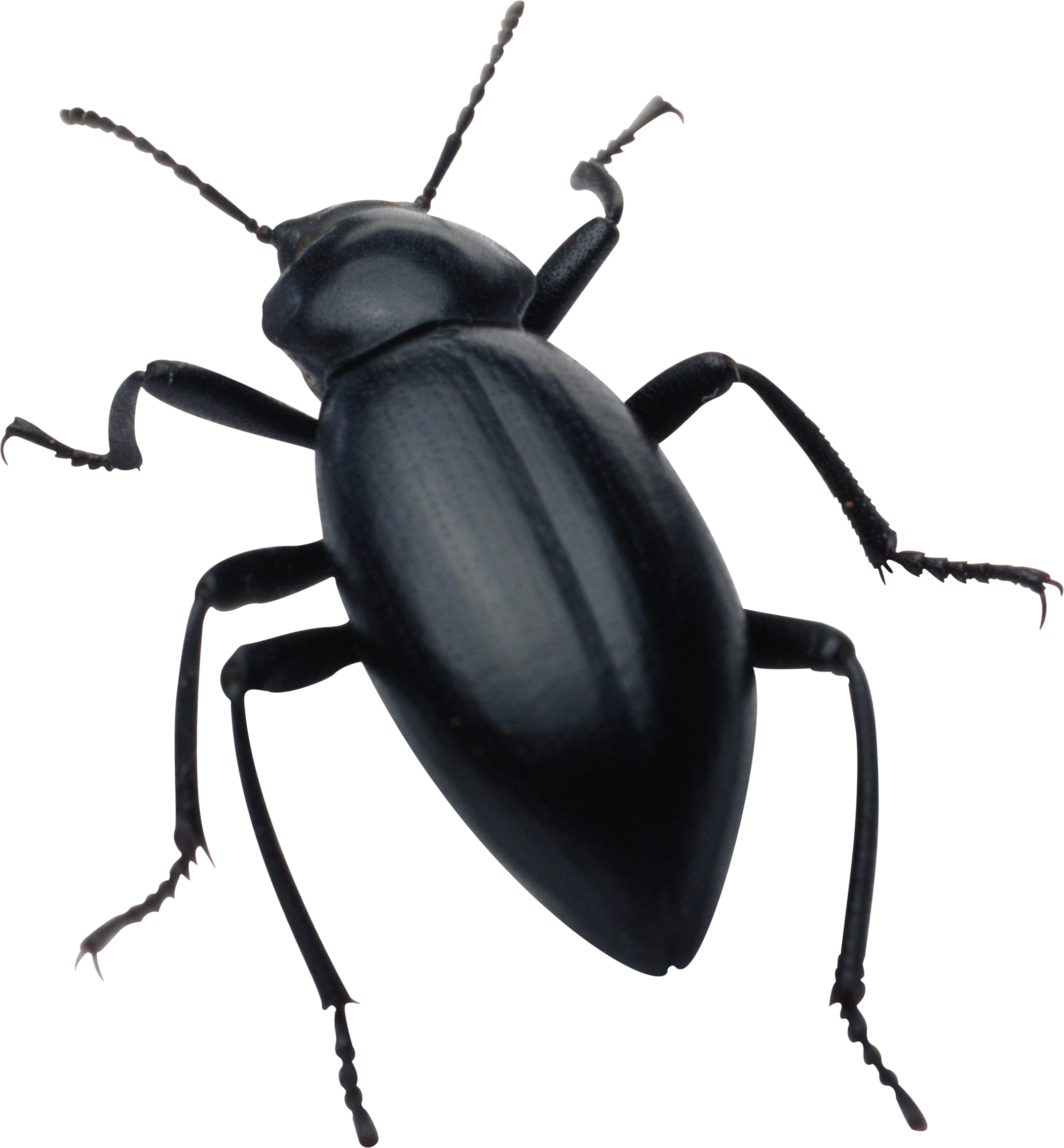 Bug HD PNG Transparent Bug HD.PNG Images.