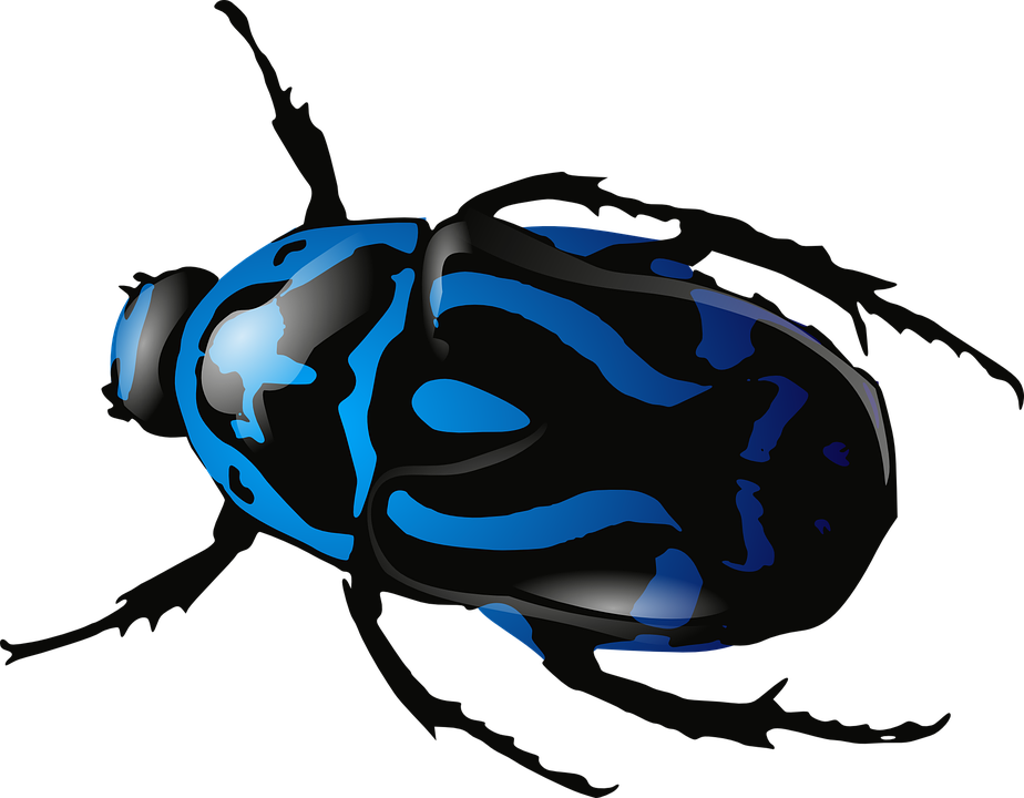 Beetle, Insect, Bug, Blue, Black, Legs, Body, Animals - Bug HD PNG