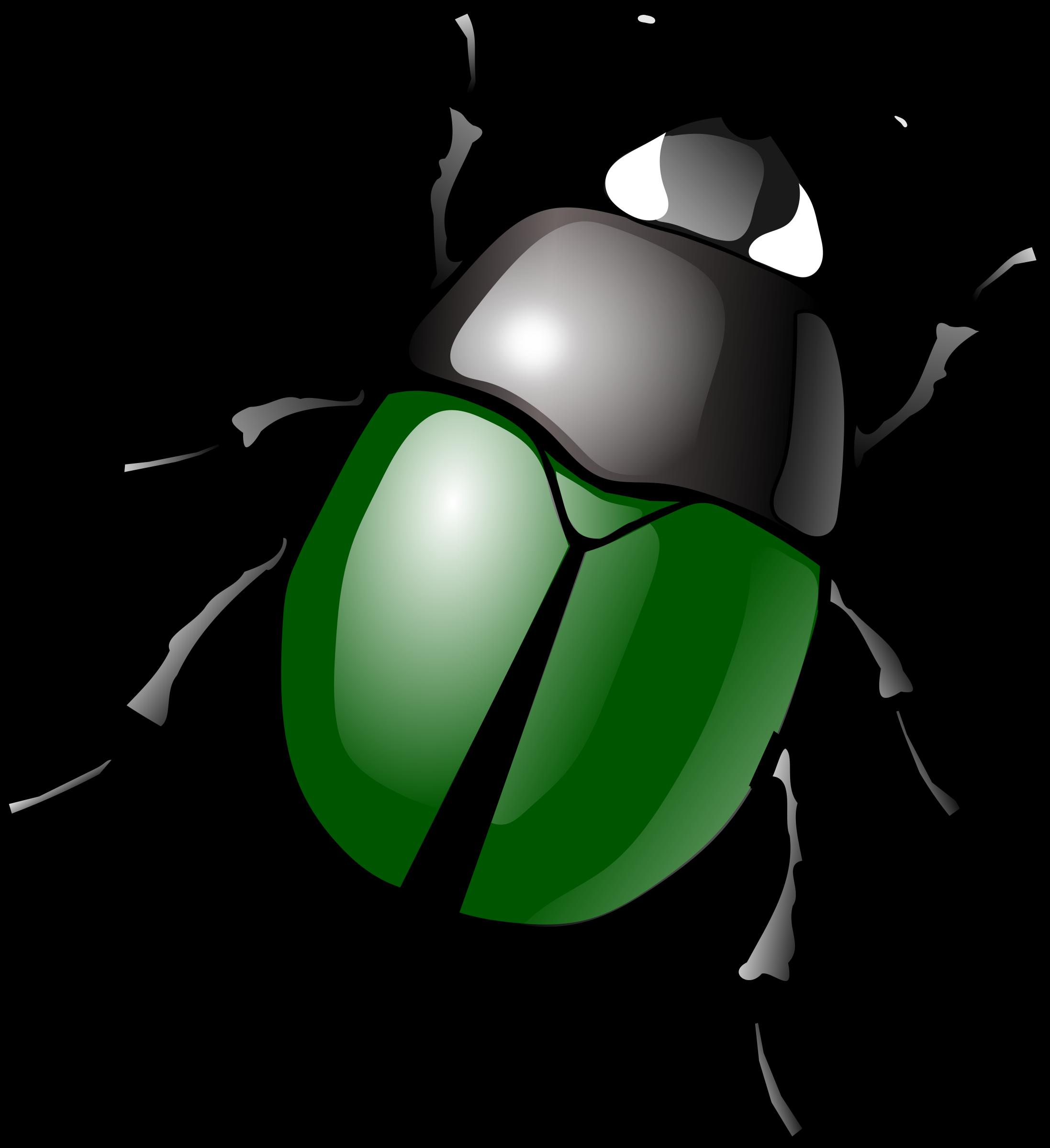 Bug #11 - Bug HD PNG