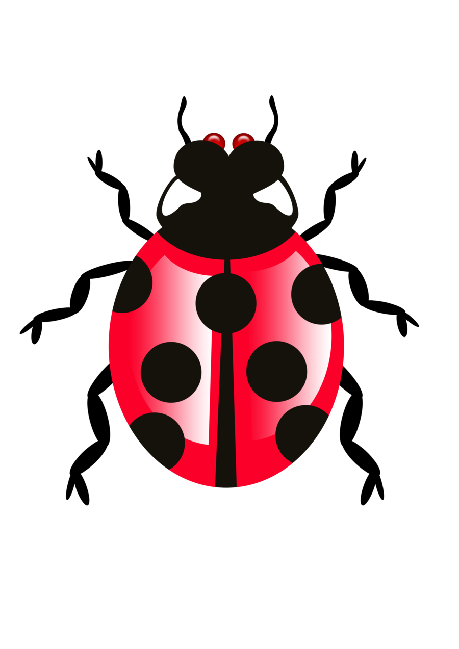 Bug Icon Transparent PNG - Bug HD PNG