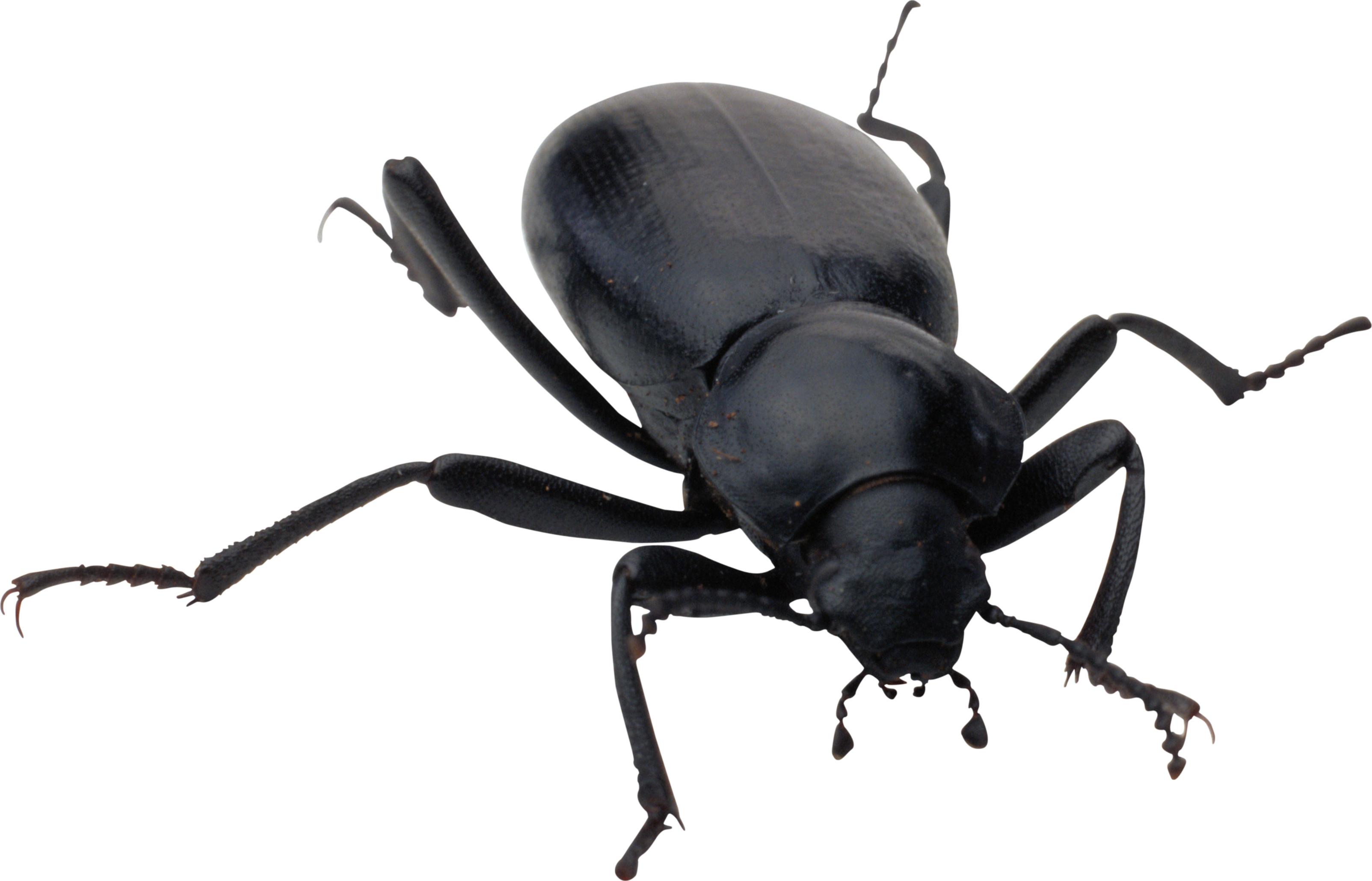 bug PNG image - Bug HD PNG
