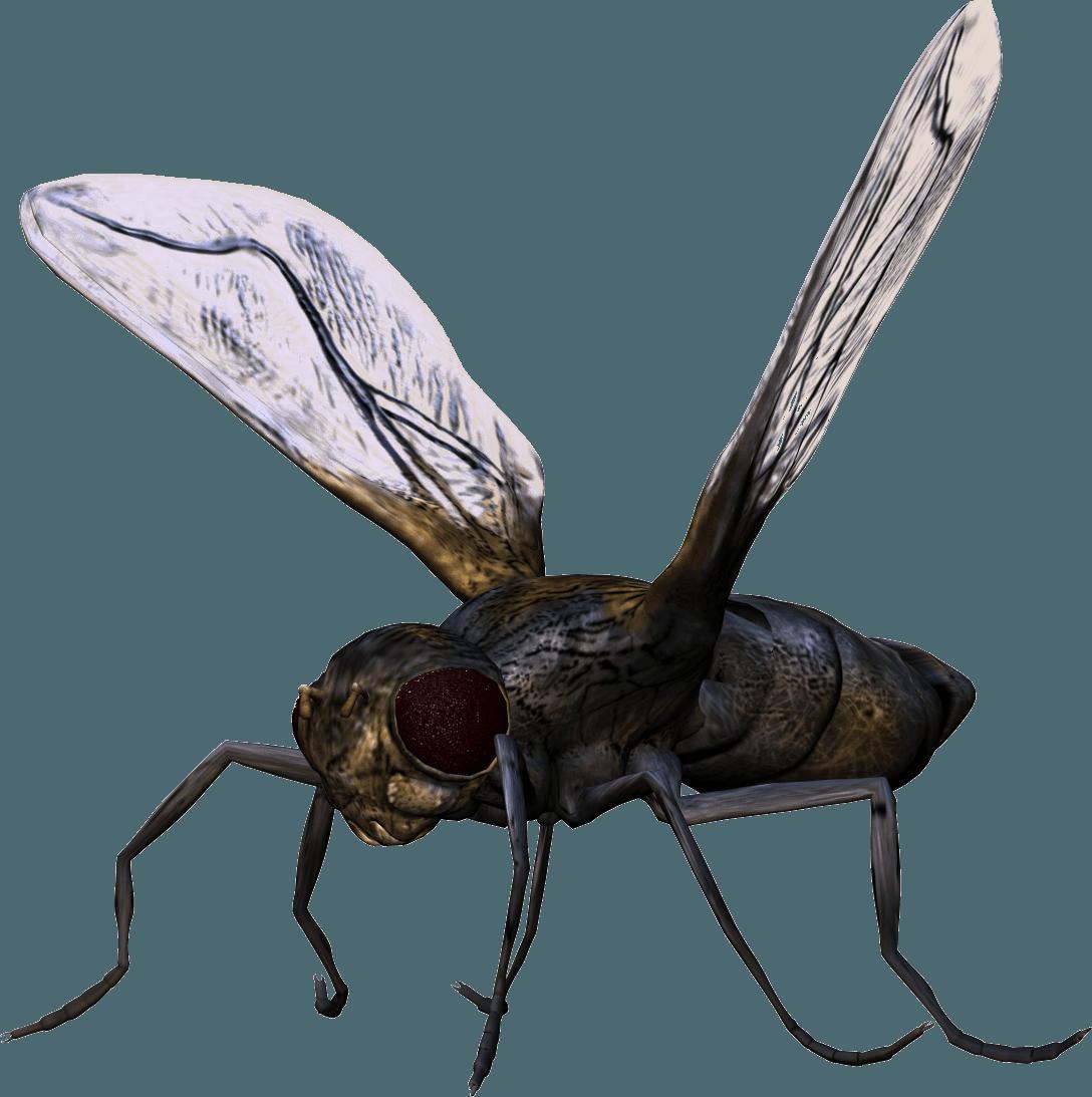 Bug Png Image PNG Image - Bug HD PNG