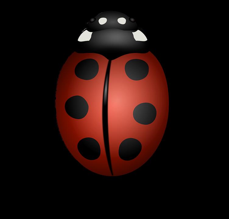Ladybug, Animal, Beetle, Bug, Insect, Luck, Summer, Red - Bug HD PNG