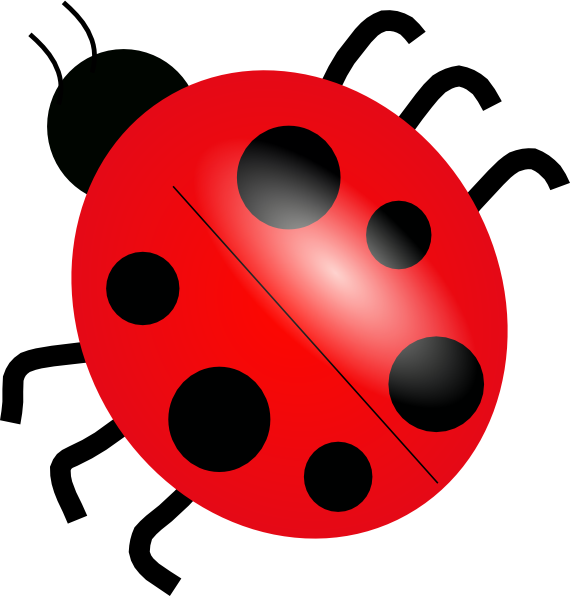 Ladybug Cartoon Images HD Wallpapers - Bug HD PNG