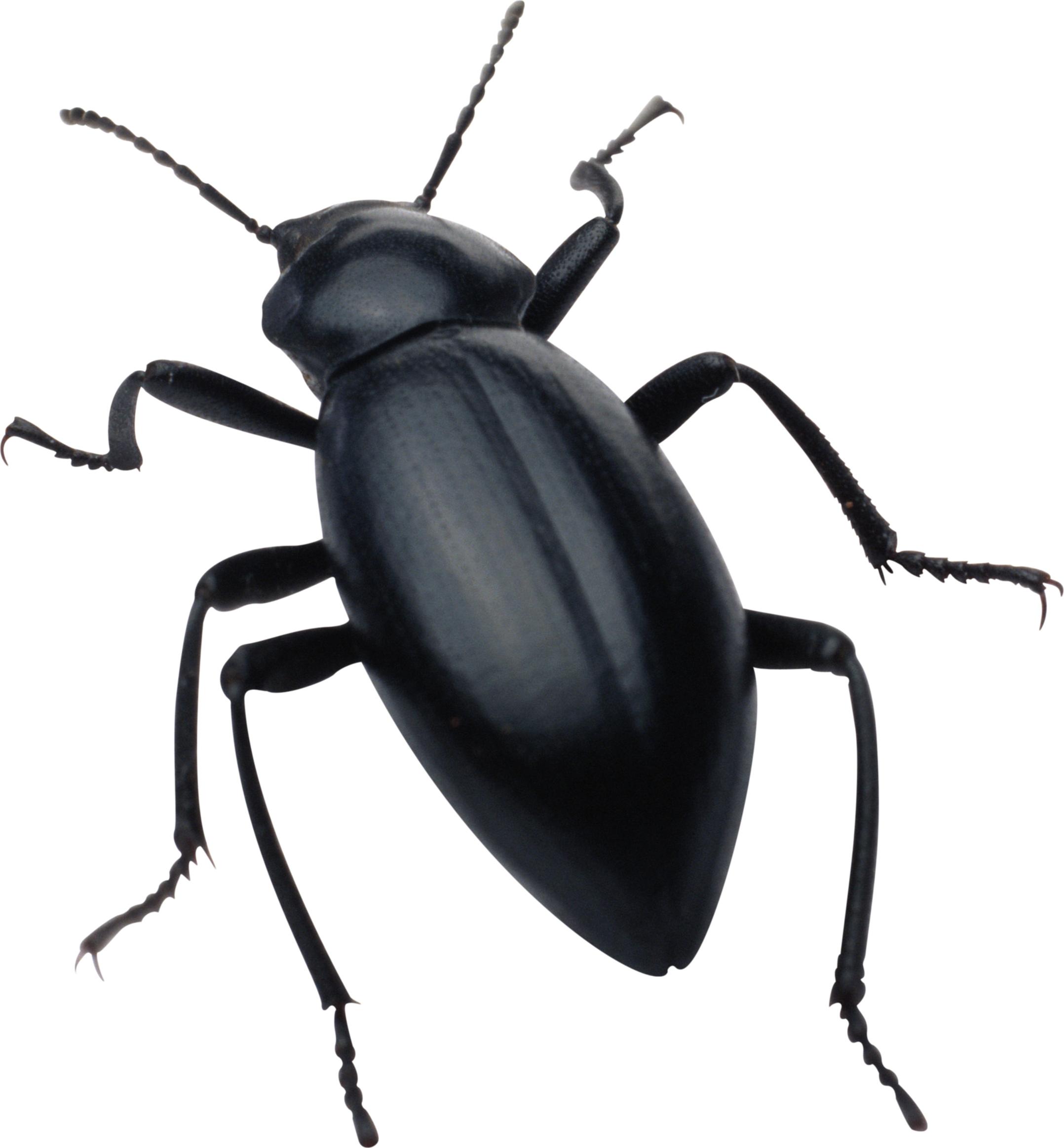 black bug PNG image - Bug PNG