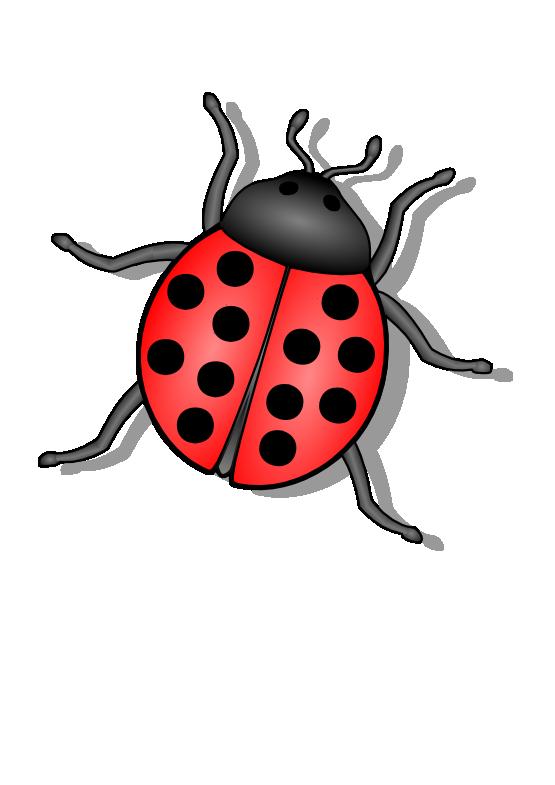 Bug Png 6 PNG Image - Bug PNG