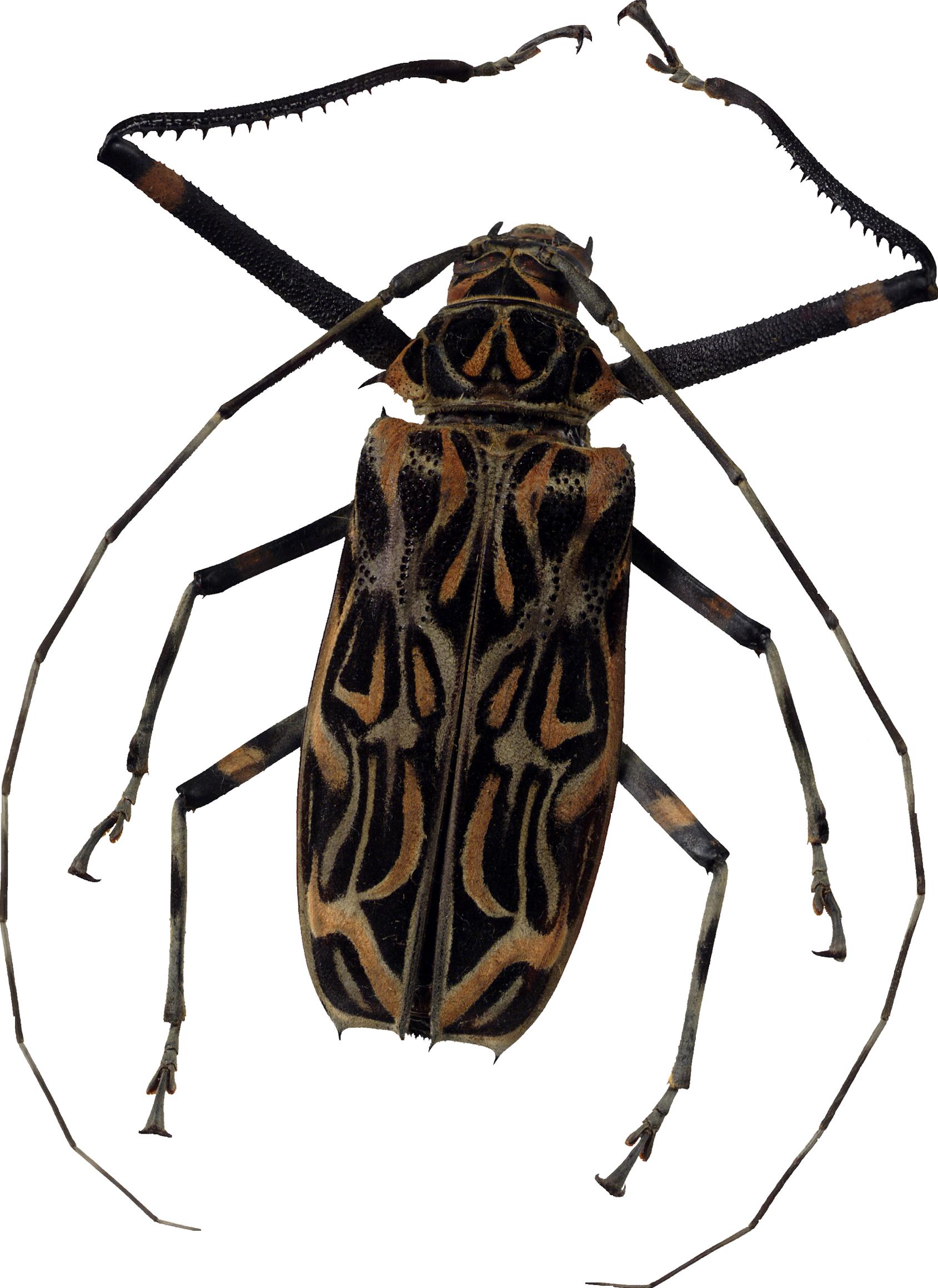 bug PNG image - Bug PNG